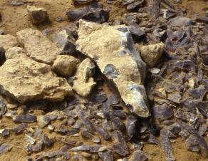 Photographie d'un amas de silex préhistorique