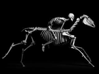 Homme et cheval.
