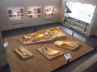 Présentation du moulage d'Helmut dans le musée.
