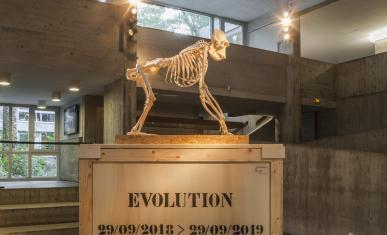 Exposition Évolution, photo 1.