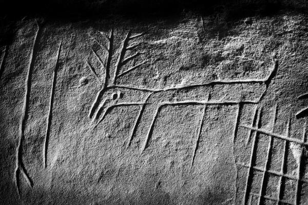 Photographie d'une gravure de cervidé dans un abri sous roche du massif de Fontainebleau