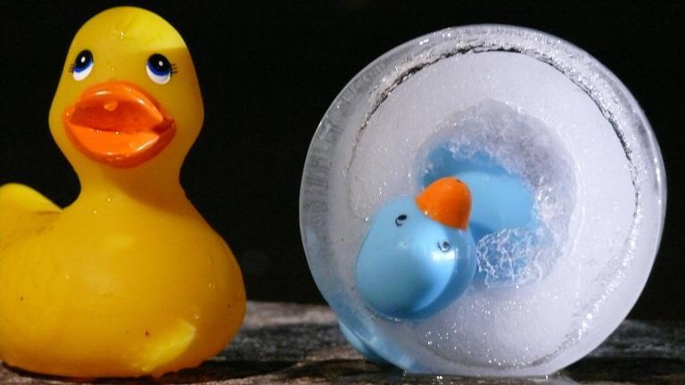 Photographie de deux canards en plastique dont un est pris dans la glace