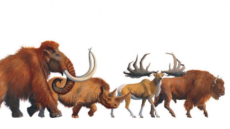 Frise picturale représentant des animaux préhistoriques