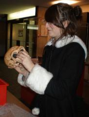 Une élève étudie un moulage de crâne d'homme préhistorique